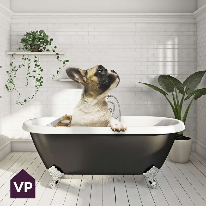 French bulldog in a bath